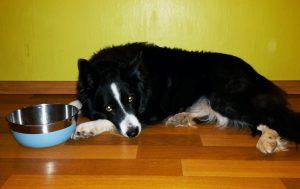 Hundenapf rutschfest_Hund mit Napf